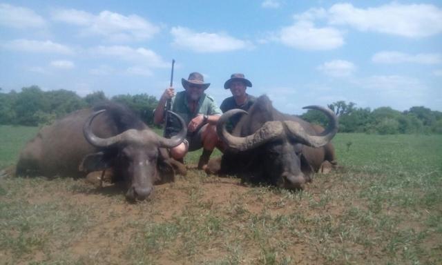 dual buffalo trophy photo