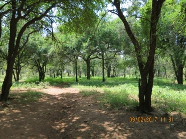 hunting road at sondelani reserve