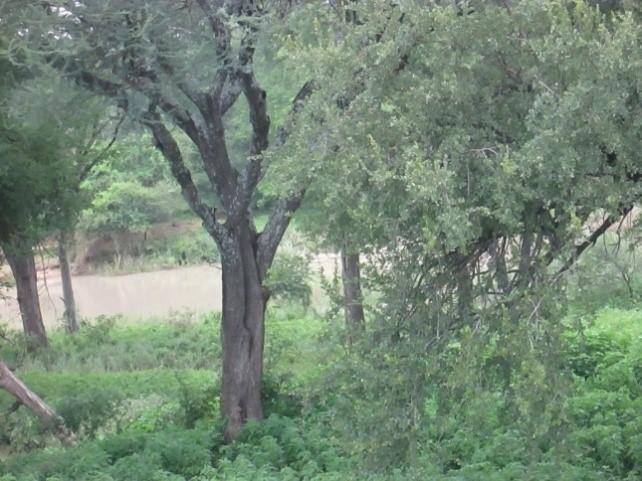 mtshabezi river embankment