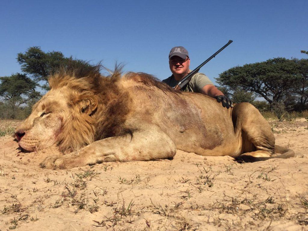Lion hunt South Africa